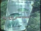 Port cros Apnee 1998 (ok)