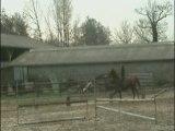cso avec mon cheval