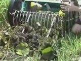 LAKE RAKE and POND RAKE for aquatic weeds or muck