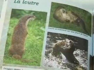 Amenagements_loutre_ARMOR tv - Le journal - 06-10-08