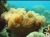 """Lagon de Nouvelle Caledonie """"patrimoine mondial"""" de l'unesco"""