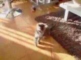 Dragibus la vie d'un chaton