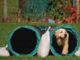 CCF Club Canin Forezien - Concours Agility 2008