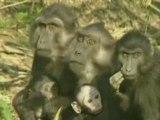 Drôles de singes !