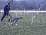 shinuit entraînement agility