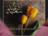 ANACHEED alayki mini salam