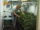 Plante Ton Herbe - Plantation d Interieur - Cannabis