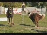 Les Dingos de Saulx