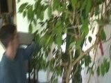 Départ du Ficus