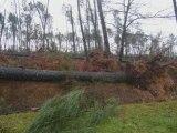 Dégats après la tempête du 24 Janvier 2009 Landes