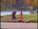 humour pub (l'ours contre l'homme )