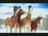 Bataille ne neige pour chevaux