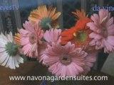 Navona Garden Suites Rome - 5 Star Suites In Rome