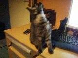 mon chat qui fait miaou.