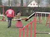 Entraînement agility César 14-12-08 (2).