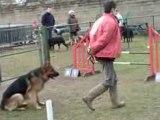 Entraînement agility César 25-01-09 (1).