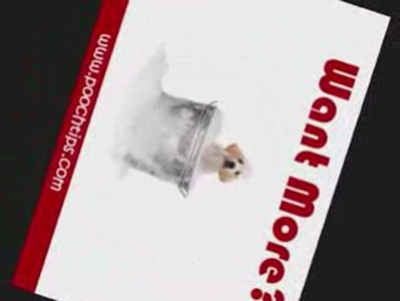 learn dog training hot topic