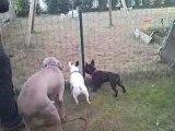 Ballade de chiens