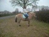 Donjouan, poney fjord a la cabriole......