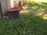 Mes chats : Bengal, Maine coon et Persans