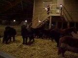 Heure du Repas + Réva + Quelques poneys et Chevaux