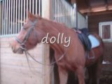 Les poney  du centre equestre de guitard