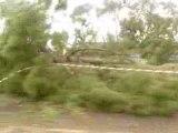 Ravages de la Tempête Klaus du 24 01 2009 Landes  Aquitaine