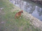 dona staffie rouge