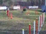 Entrainement agility 01/03/2009 Dixie 1er parcours