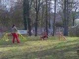 Entrainement agility 01/03/2009 Dixie 3ème parcours