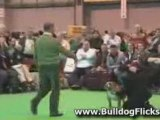 Pedigree Dogs Exposed bulldogs - extended cut