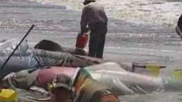 Whales stranded in Australia