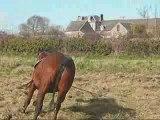 Oxford, cheval, chevaux, trotteur, ...