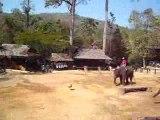 catpat thailande elephants 1