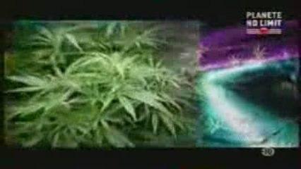Experience cannabis a Amsterdam_2/3