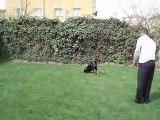 Köpek Eğitimi - 3