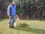 Köpek Eğitimi - 5