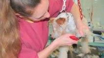 Espace Canin - Salon de toilettage pour chiens et chats