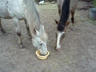 Dine et Coco