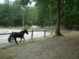 Epona, galop des poneys