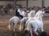 Les pitchounes de Loucha(trophé spectacle equestre 2009)
