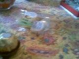 Le casse-couilles en chocolat