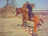 dressage&obstacle
