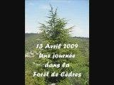 Balade en Forêt de Cèdres