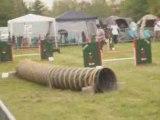 Concours d'agility Bourg-En-Bresse 19 avril 2009