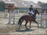 Concours chevaux guilers