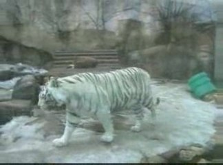 The Moscow zoo. Московский зоопарк