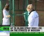 No food and mercy for stray dogs in Moscow shelters