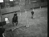 Mon parcours dans l'équitation