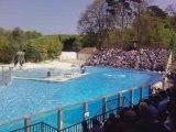 Zoo de Beauval. Les otaries.